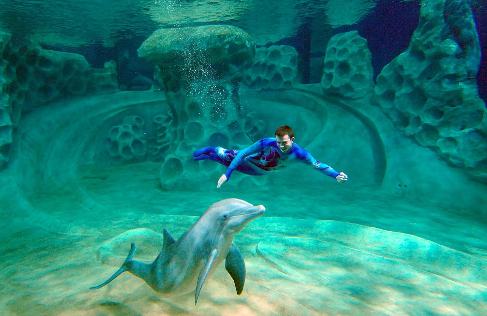 aquarium-swimming-with-dolphin-in-Georgia-Aquarium-USA