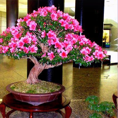 beautiful-bonsai-tree
