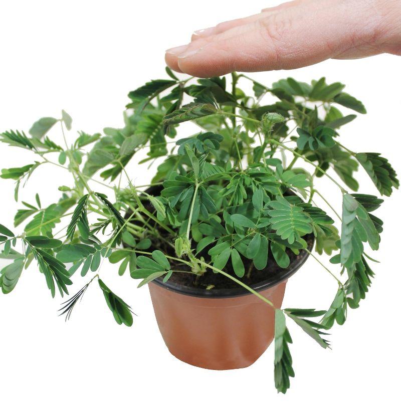 shy-plant-leave