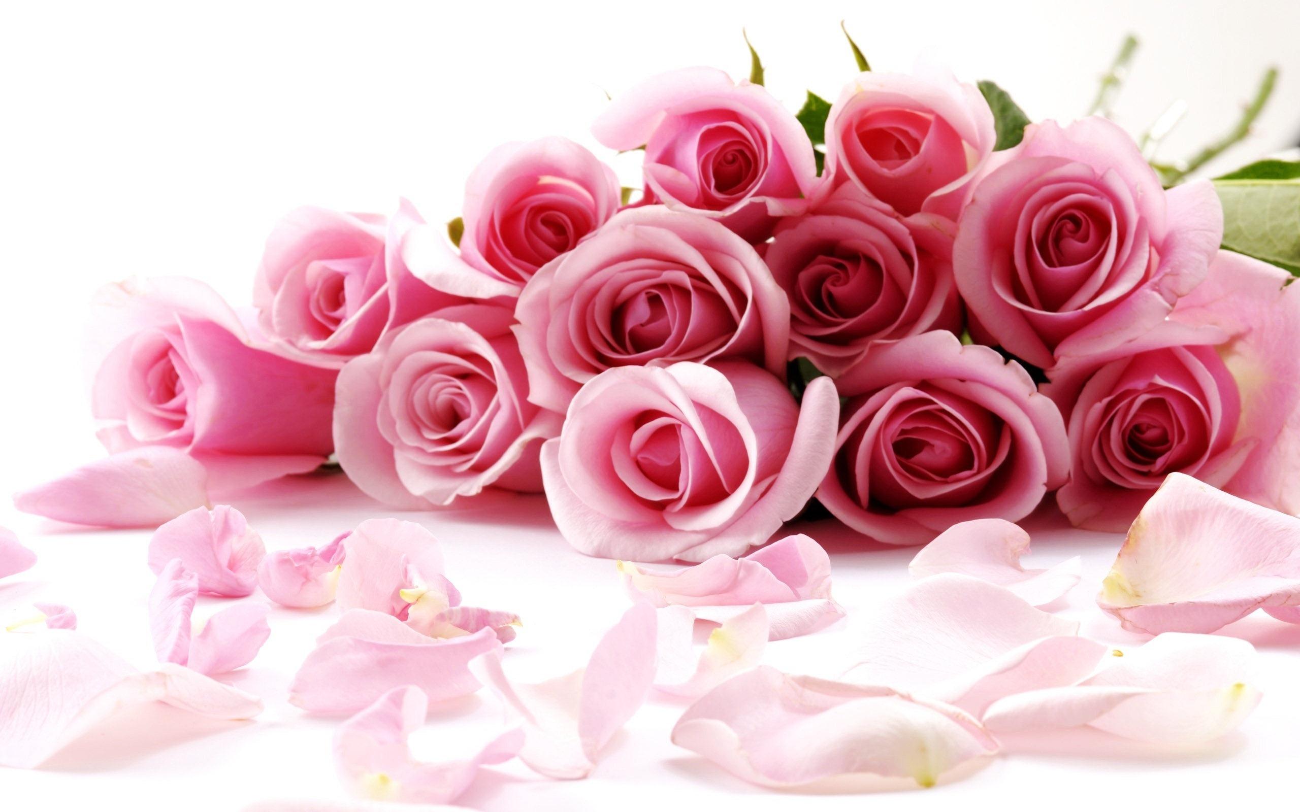 Red Rose Symbol Of Valentines Day