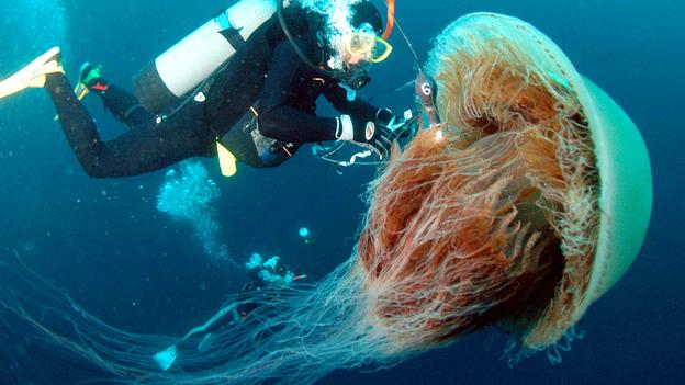 diver-with-big-jellyfish