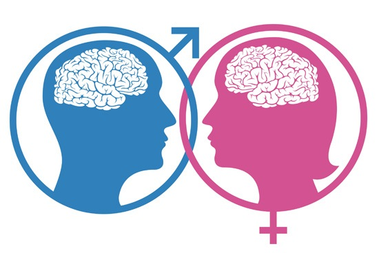 female-male-brain-differences-in-size-by-10-percent