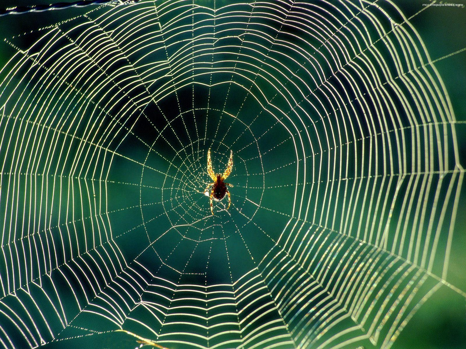 spider-recycle-silk-in-web-for-reuse-again