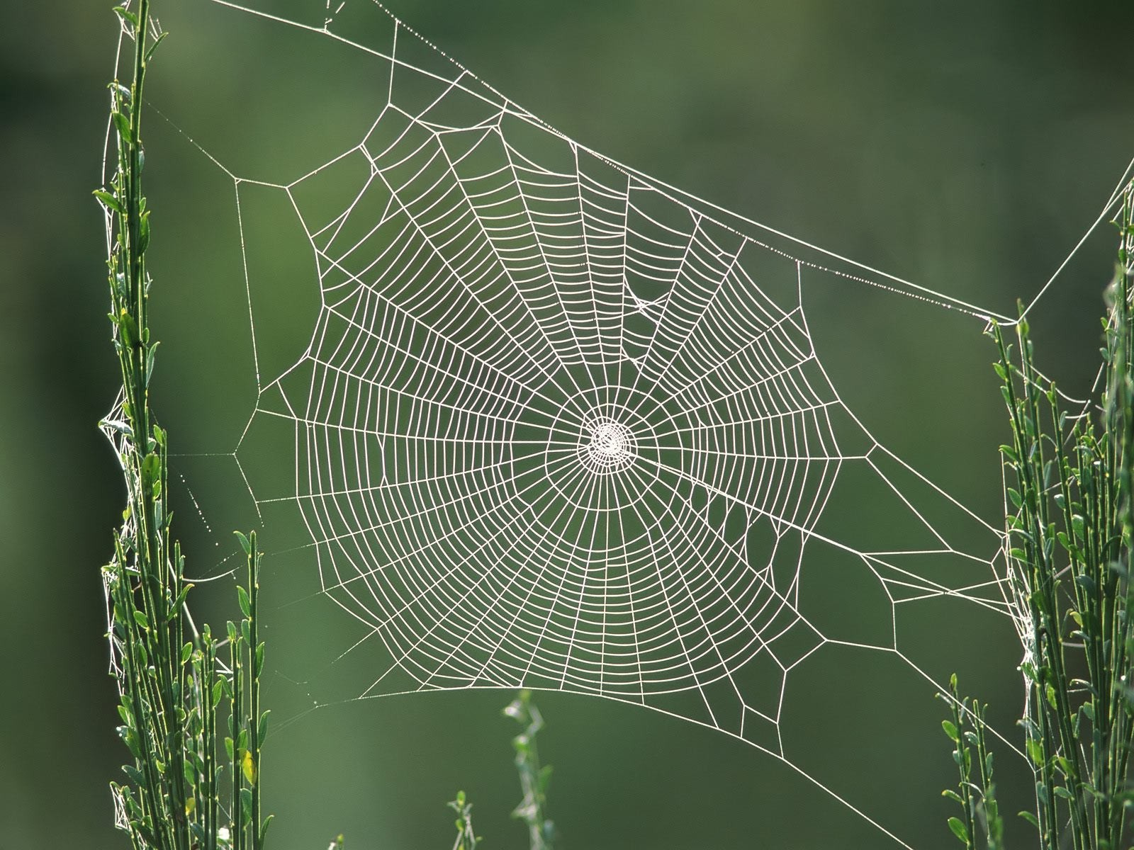 spider-web-trap-for-insects