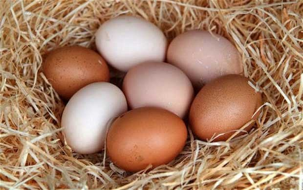 USA-Eggs-illegal-in-UK