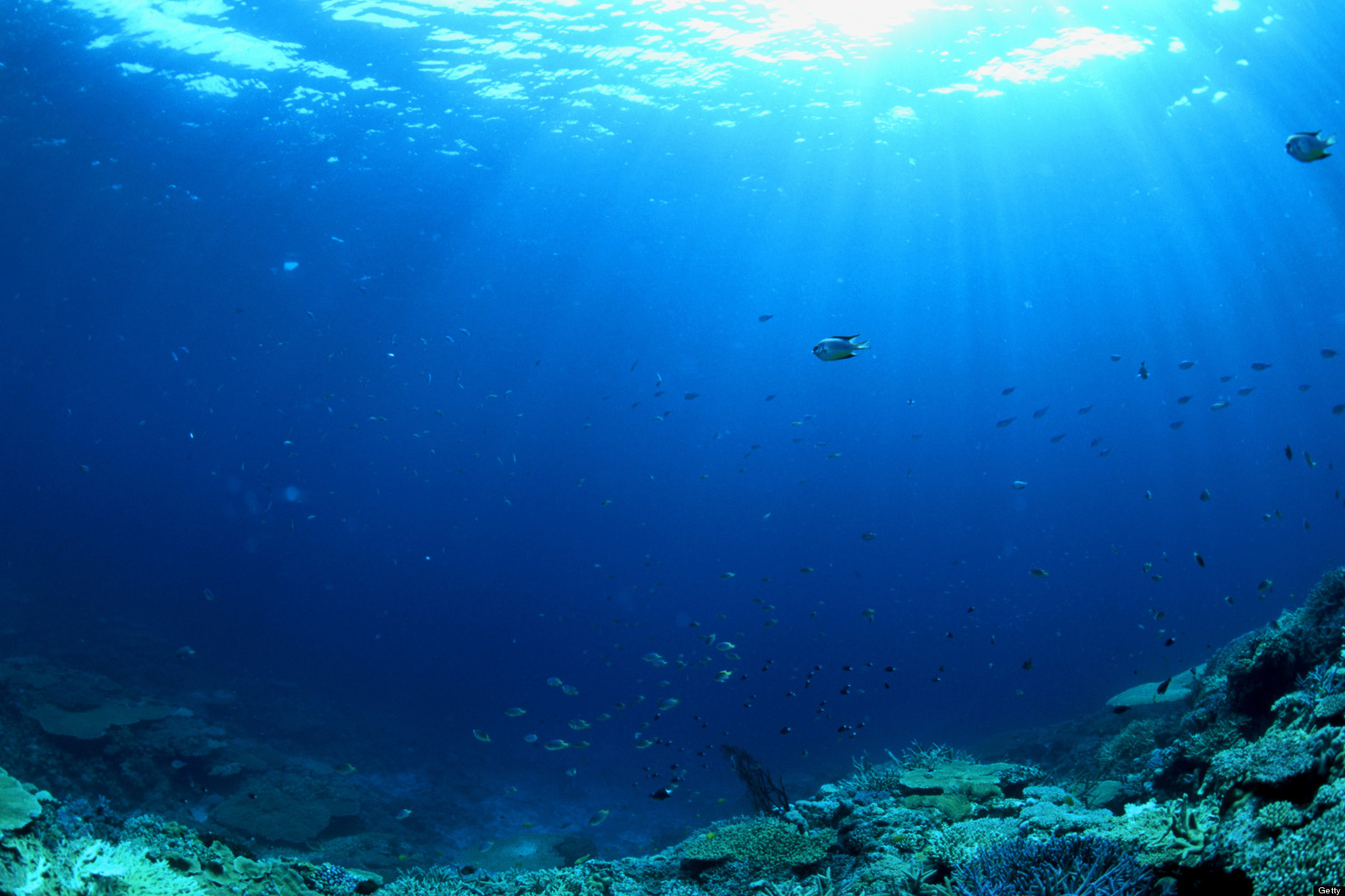WORLD-70-percent-are-OCEANS-only-5-percent-explored