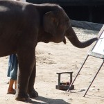 Elephant can paint