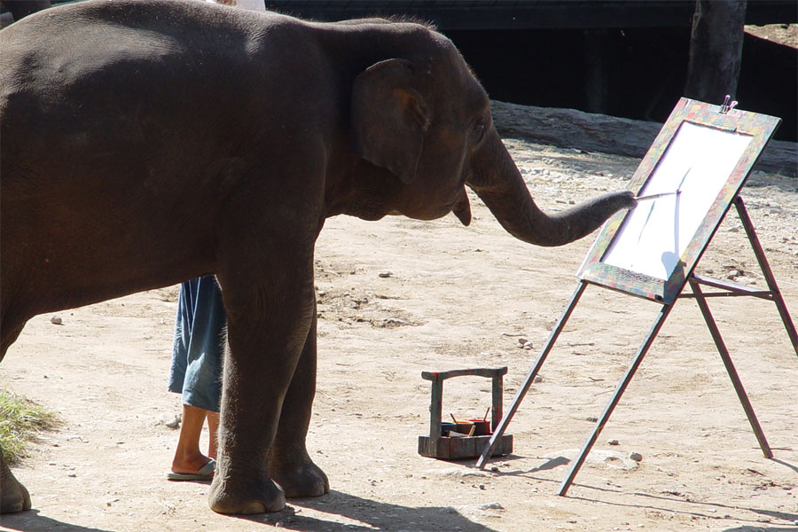 Elephant-can-be-taught-how-to-paint