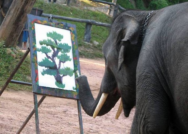elephant-are-most-clever-and-intelligent-animal