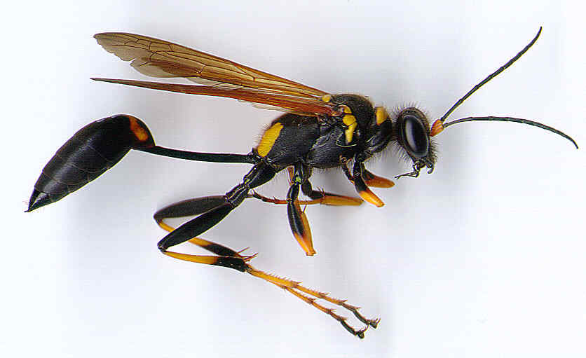wasp-high-resolution-photos