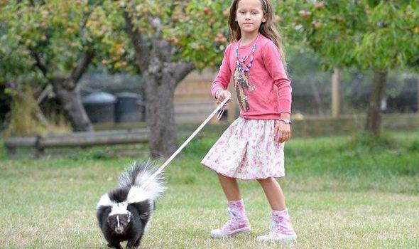 A-skunk-pet