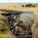 The-great-beast-migration-at-Masai-mara