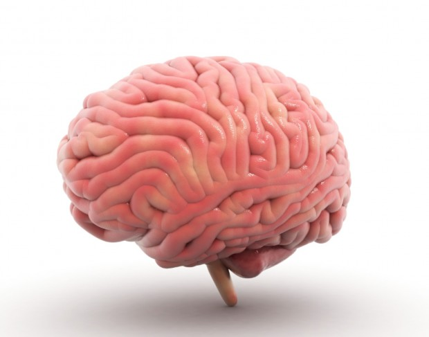 The-human-brain-is-pink