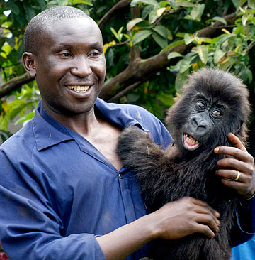 A-man-interacting-with-a-baby-gorilla