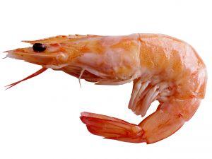 Every shrimp's heart has in its head