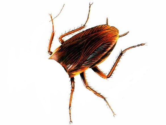 cockroach head cut off