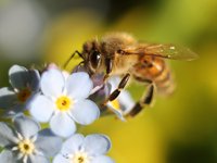 A bee has to visit 2 million flowers for produce a single pound of honey