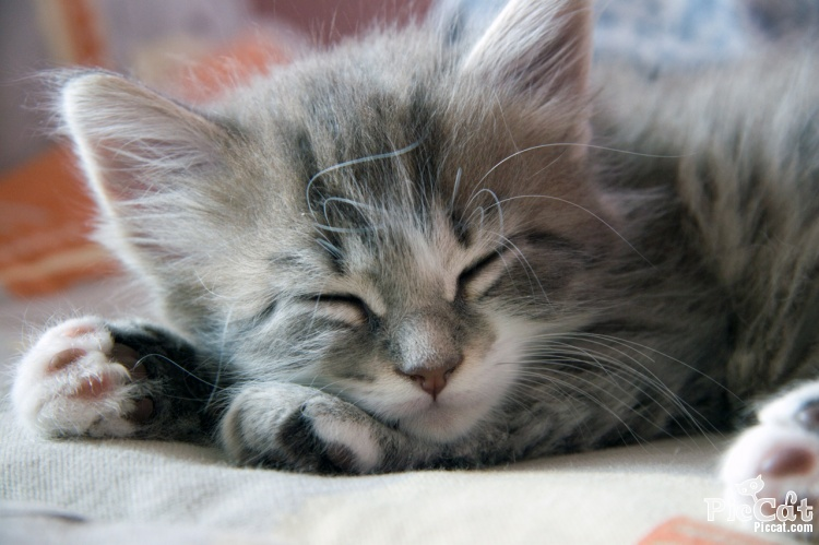 A cat sleep more time than others mammals and humans in a day