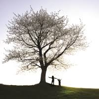 A tree can provide enough oxygen for 2 people's whole lives