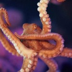 The Octopus is the creepiest creature in deep of water
