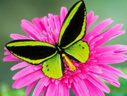 butterfly-green-colour