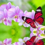 butterfly-pink-on-flower