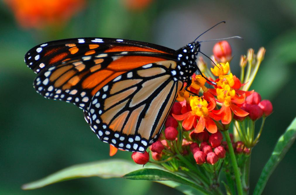 butterfly-on-beautiful-flower-taste