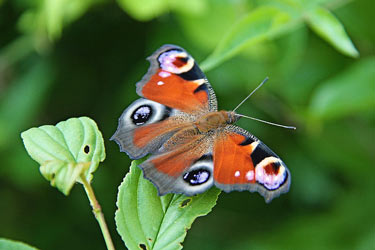 butterfly-on-leaf