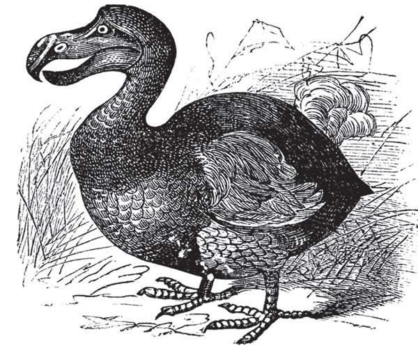 dodo-bird-extinct-skeleton-auction