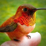 Bee Hummingbird – Worlds Smallest Bird