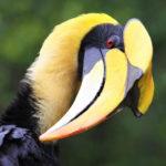 Hornbill Bird – Facts