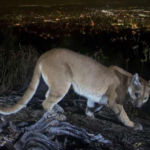 Mother saved her child from a lion